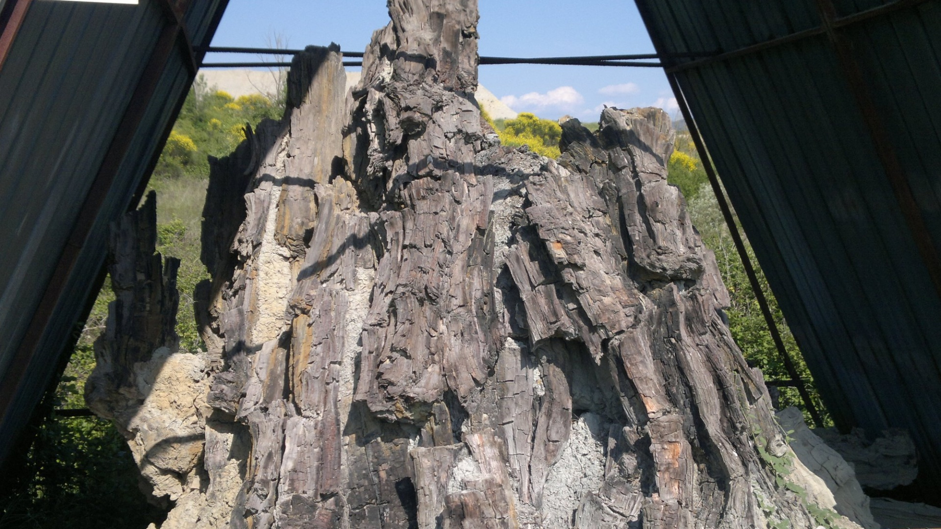 Foresta fossile di Dunarobba e le piante mummificate 3 milioni di anni fa