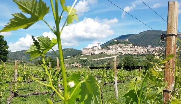 """""""Saio: la cantina all'ombra della Basilica di Assisi""""<br>Bubble's Italia - luglio 2018"""