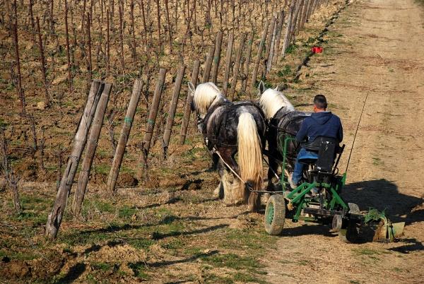 """""""Cantina Di Filippo: dove il vino nasce tra cavalli e oche""""<br>Bubble's Italia - marzo 2019"""