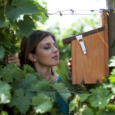 AZIENDA AGRICOLA ROMANELLI: a Montefalco, nel cuore dell'Umbria, azienda produttrice di vino e olio d'eccellenza con un'attenzione ai progetti di ecosostenibilità.